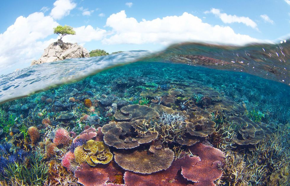 Den nye park er hjemsted for mere end 250 arter af hårdkoraller og omkring 360 fiskearter. Foto: Eric Madeja/WWF Malaysia