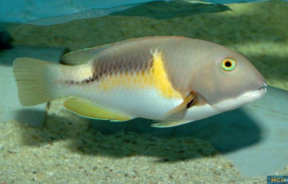 Klog fisk på video