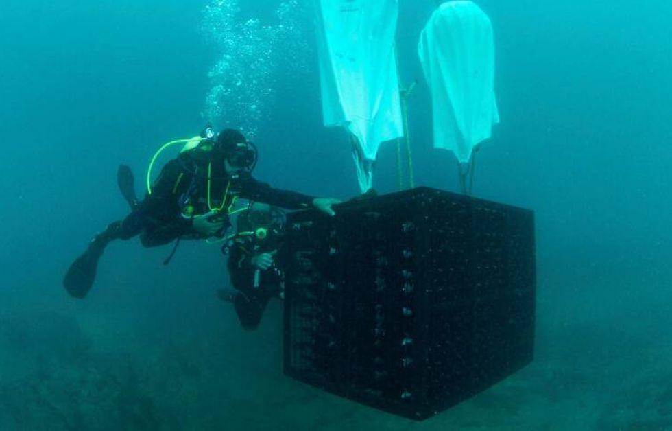 Dykkere lagrer vin under vandet (Foto: Handout)