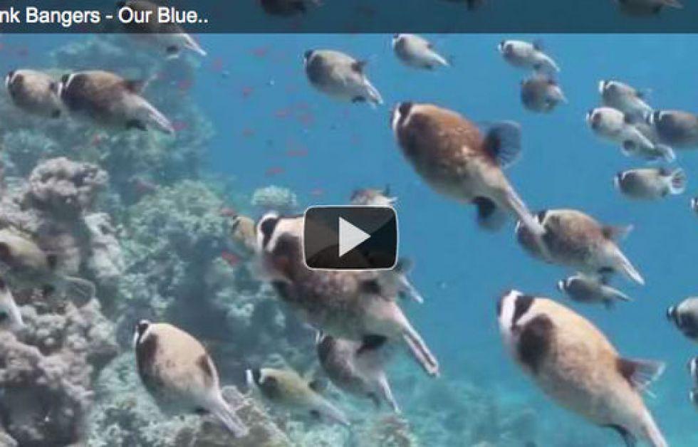 Undervandsmusikvideo støtter livet i havet