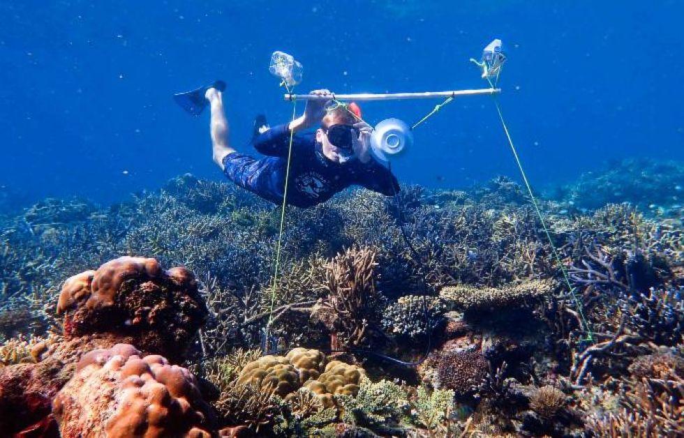 Forsker Tim Gordon sætter en undervandshøjtaler op på et koral-rev.