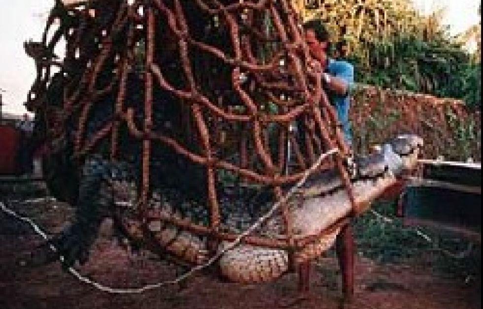 Krokodillejagt afvist af den australske regering