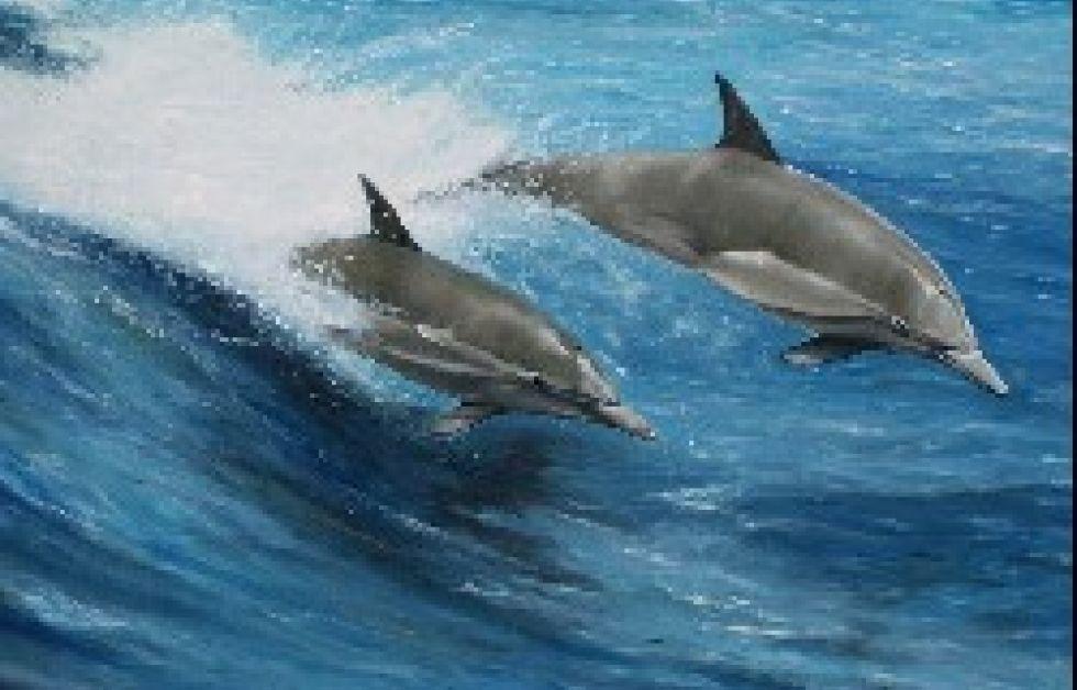Costa Rica forbyder svømning med hvaler og delfiner