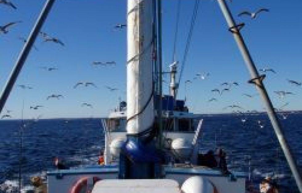 Øresund plages af tabte fiskenet