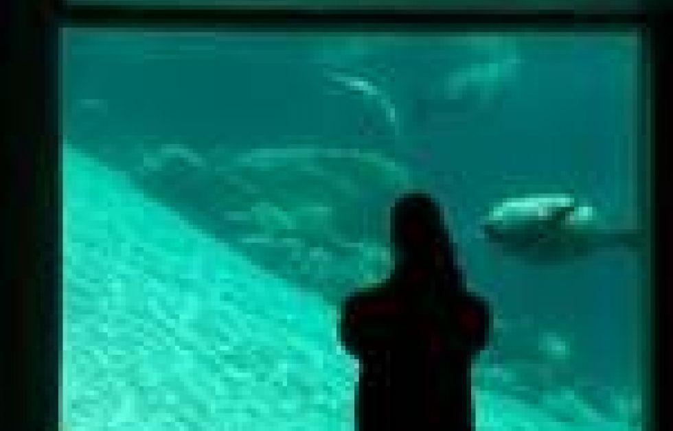 Oceanarium holder tæt