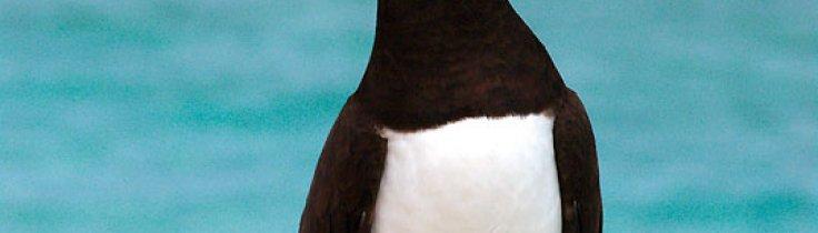 WWF-klumme – Tubbataha