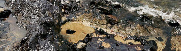 WWF-klumme – når det ser rigtig sort ud