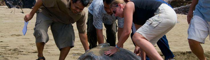 WWF-klumme – danske Dorte viser vejen