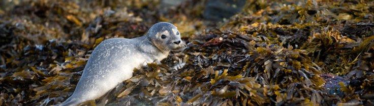 Kosterhavet – Sveriges første marine nationalpark!