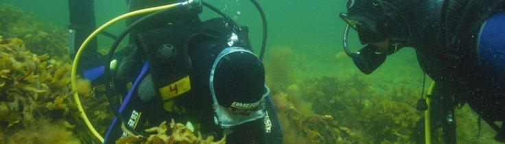 Dyk på skemaet – dykning som undervisningsredskab