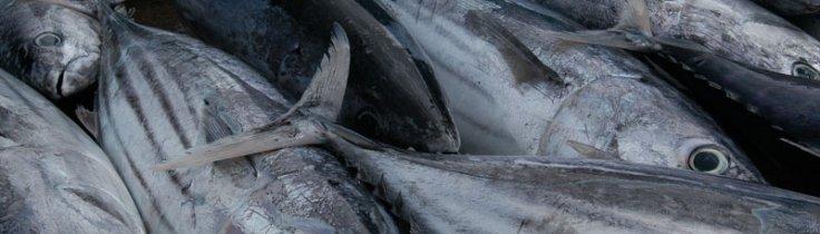WWF-klumme – Mere ligelig fordeling af goderne