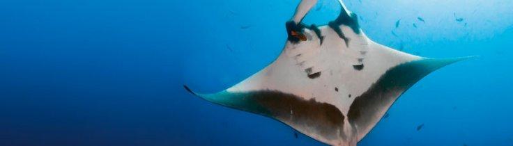 Socorro Islands – Mægtige møder