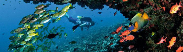 Maldiverne – Grib dagen!