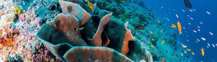 Alphonse Island – Luksuriøs  dykning ved  Seychellerne
